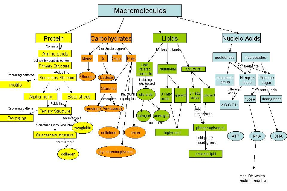 macromolecules of life testing for starch